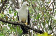 Monitoramento ambiental garante riqueza de espécies