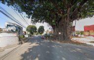 Avenida Japão no Bairro Cariru terá trânsito desviado para poda de árvore
