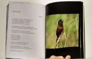 """Perspectiva de voo"", poesias de Joselina Carvalho"