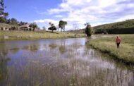 Cenibra promove técnicas sustentáveis para combater escassez hídrica
