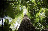 Florestas plantadas no Brasil alcançam 10 milhões de hectares em 2019