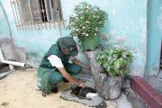 Dados apontam alto índice de infestação por Aedes aegypti em Ipatinga