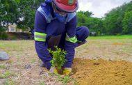 Usiminas realiza plantio de mudas