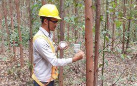 Aperam BioEnergia avança em sustentabilidade com controle biológico de pragas